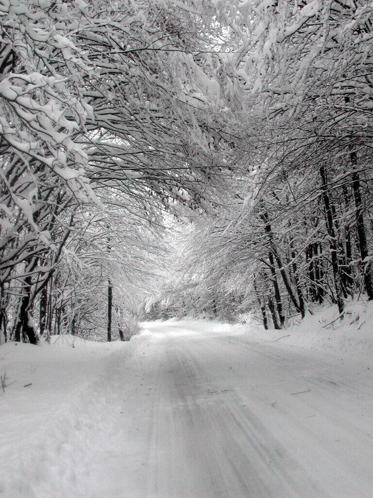 winter-1404890.jpg